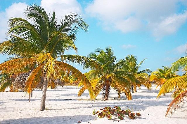 El Caribe perdió hasta un 65,5% de sus reservas durante todo el pasado 2020