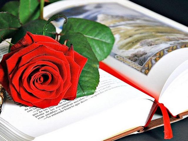 Día de Sant Jordi, tras la rosa que salió del corazón de la princesa