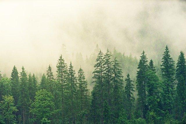 Baños de bosque, una opción turística que viene pegando fuerte